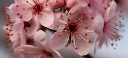 Yeni Bir Bahar